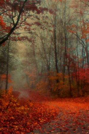 Red Autumist IPhone Wallpaper Mobile Wallpaper