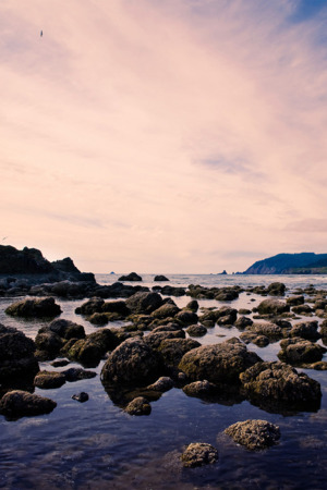 Sea Shore Rocks IPhone Wallpaper Mobile Wallpaper