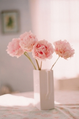Sweet Flower IPhone Wallpaper Mobile Wallpaper