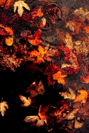 Leaves Floating On The Lake IPhone Wallpaper Mobile Wallpaper