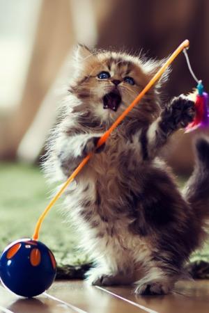 Kitten Play Lovely Style IPhone Wallpaper Mobile Wallpaper