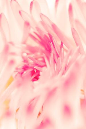 Spring Daisy Flower IPhone Wallpaper Mobile Wallpaper