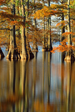 Submerged Roots Beauty IPhone Wallpaper Mobile Wallpaper