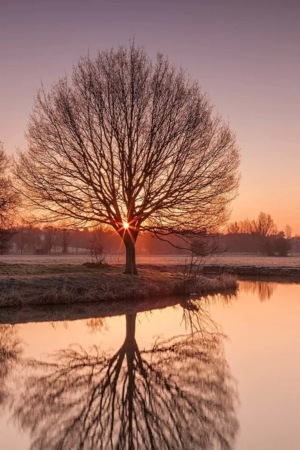 Sunset Tree Reflection IPhone Wallpaper Mobile Wallpaper