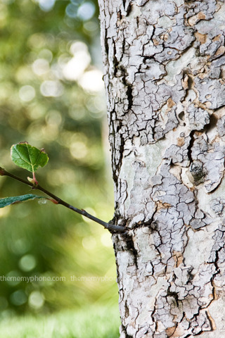 Tree Bark Baby Branch IPhone Wallpaper Mobile Wallpaper