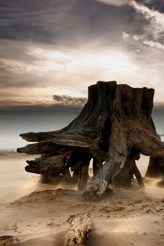 Stumped Jeanette Oerlemans IPhone Wallpaper Mobile Wallpaper