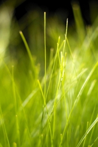 Fresh Green Grass Iphone Wallpaper Mobile Wallpaper