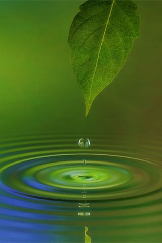 Water Leaf Nature IPhone Wallpaper Mobile Wallpaper