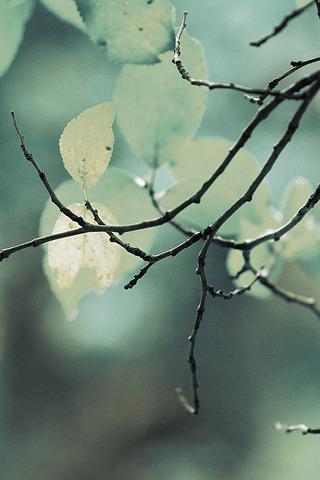 Flower Trees & Twigs IPhone Wallpaper Mobile Wallpaper