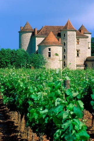 Vineyard Cahors Valley France IPhone Wallpaper Mobile Wallpaper