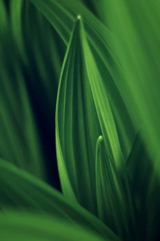 Green Nature Leafs IPhone Wallpaper Mobile Wallpaper