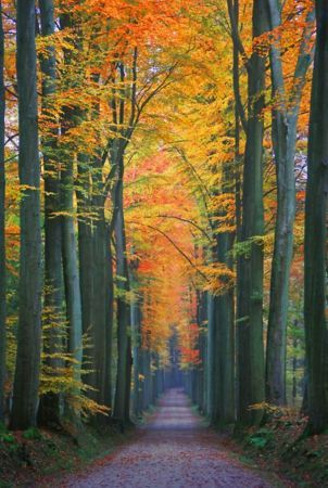 Way Autumn Trees & Fall Leaves IPhone Wallpaper Mobile Wallpaper