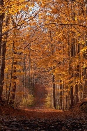 Orange Autumn Fall In Road IPhone Wallpaper Mobile Wallpaper