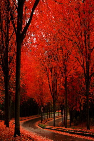 Red Autumn Nice View Road IPhone Wallpaper Mobile Wallpaper