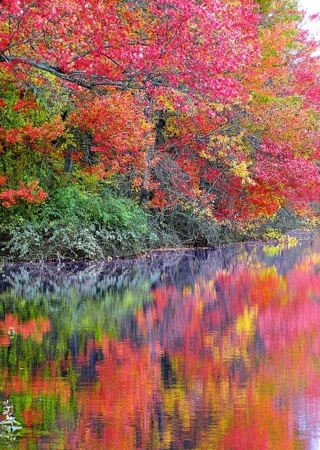 Color Autumn & Reflection IPhone Wallpaper Mobile Wallpaper