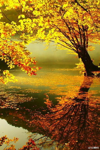 Gorgeous Fresh Autumn Colors IPhone Wallpaper Mobile Wallpaper