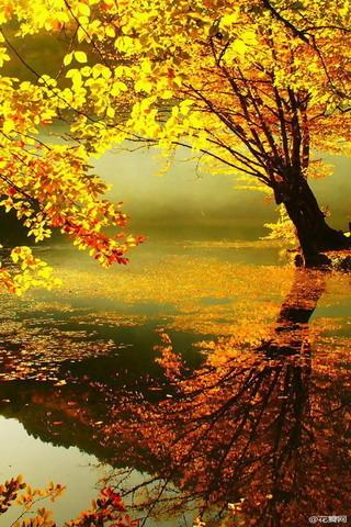 Gorgeous Fresh Autumn Colors IPhone Wallpaper Mobile Wallpaper