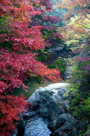Fall Colors & River IPhone Wallpaper Mobile Wallpaper