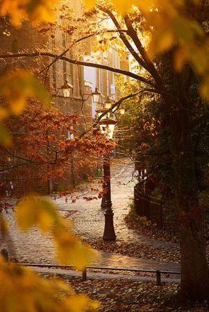 Autumn Nature Cool IPhone Wallpaper Mobile Wallpaper