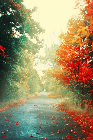 Red Autumn Trees Nature IPhone Wallpaper Mobile Wallpaper