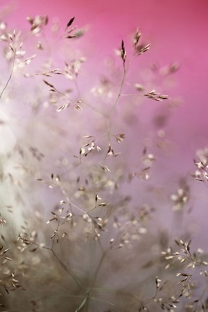 Pink Nature Flowers IPhone Wallpaper Mobile Wallpaper