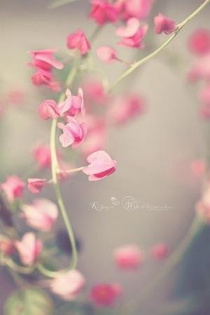 Pink Pretty Flowers IPhone Wallpaper Mobile Wallpaper