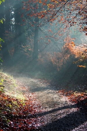 Forest Sunny Way Autumn IPhone Wallpaper Mobile Wallpaper