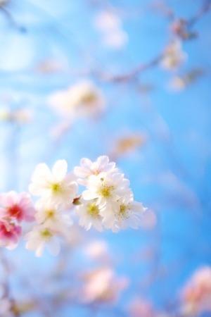 Pretty Little Flower IPhone Wallpaper Mobile Wallpaper