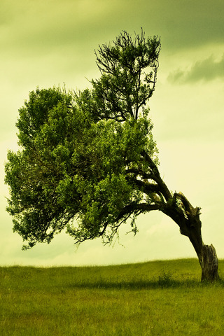 Awesome Tree Nature IPhone Wallpaper Mobile Wallpaper