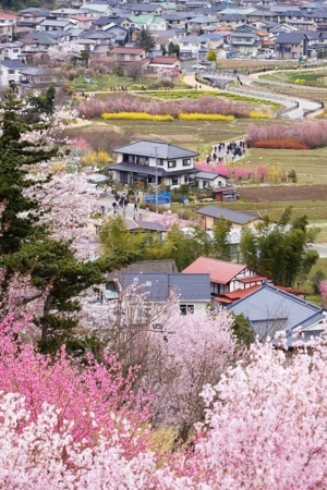 Village Of Spring IPhone Wallpaper Mobile Wallpaper