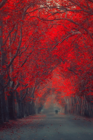 Red Nature Autumn IPhone Wallpaper Mobile Wallpaper