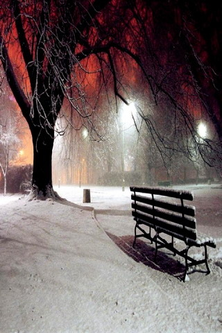 Winter NIght Nature IPhone Wallpaper Mobile Wallpaper