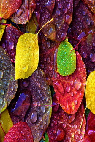 Color Autumn Dropy Leaves IPhone Wallpaper Mobile Wallpaper