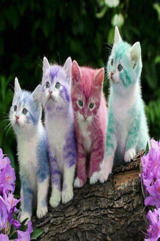 Cute Little Cats Colors IPhone Wallpaper Mobile Wallpaper