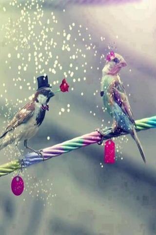 Love Birds IPhone Wallpaper Mobile Wallpaper