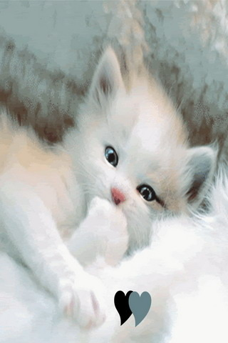 White Cute Love Kitty IPhone Wallpaper Mobile Wallpaper
