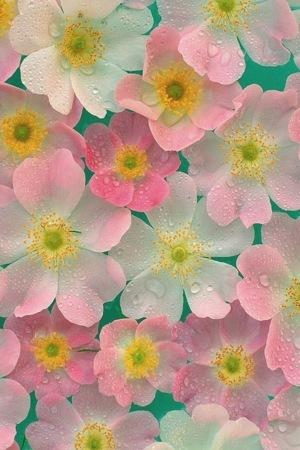 Matte Petals Pink IPhone Wallpaper Mobile Wallpaper