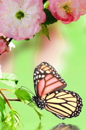 Springtime Butterfly IPhone Wallpaper Mobile Wallpaper