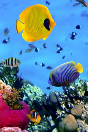 Colors Seabed Fish IPhone Wallpaper Mobile Wallpaper