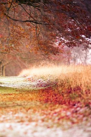 Autumn Fallen Leaves Trees IPhone Wallpaper Mobile Wallpaper