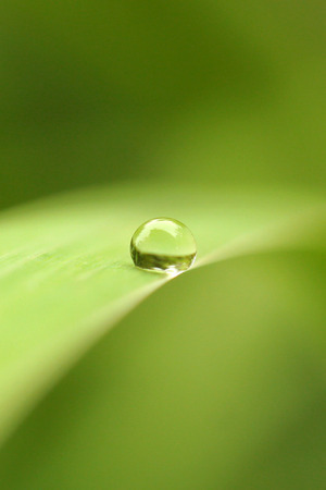 Dew Drop Green IPhone Wallpaper Mobile Wallpaper