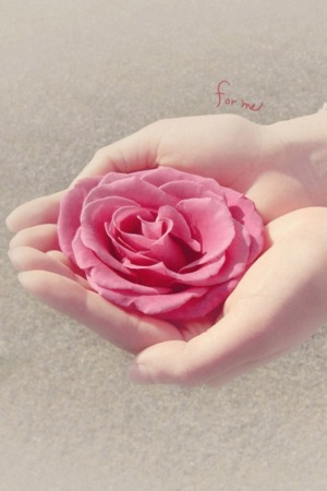 Flower On Girl Hand IPhone Wallpaper Mobile Wallpaper