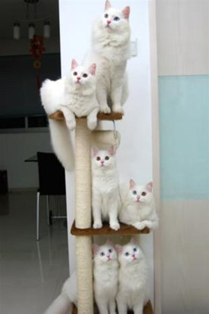 Funny Cats Expression IPhone Wallpaper Mobile Wallpaper