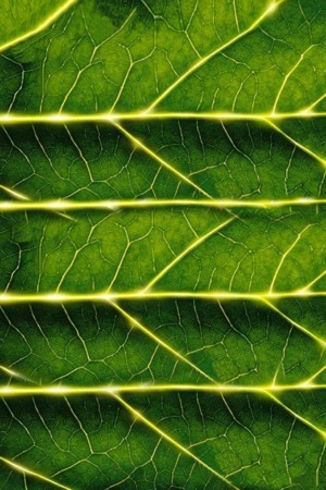 Green Leaf Texture IPhone Wallpaper Mobile Wallpaper