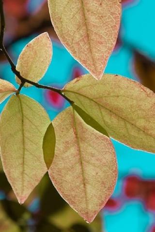 Lovely Fresh Autumn IPhone Wallpaper Mobile Wallpaper