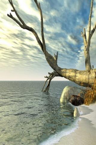 Dead Tree On Sea IPhone Wallpaper Mobile Wallpaper