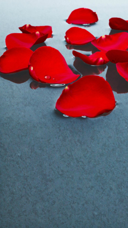 Red Flower Petal Art IPhone Wallpaper Mobile Wallpaper