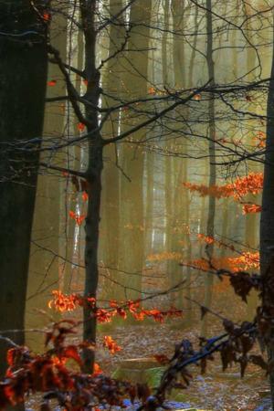 Sunlit Autumn Forest IPhone Wallpaper Mobile Wallpaper