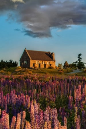 Lavender Garden House IPhone Wallpaper Mobile Wallpaper