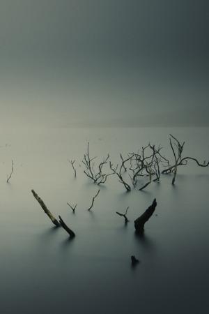 Mist Fog Underwater Trees Mobile Wallpaper